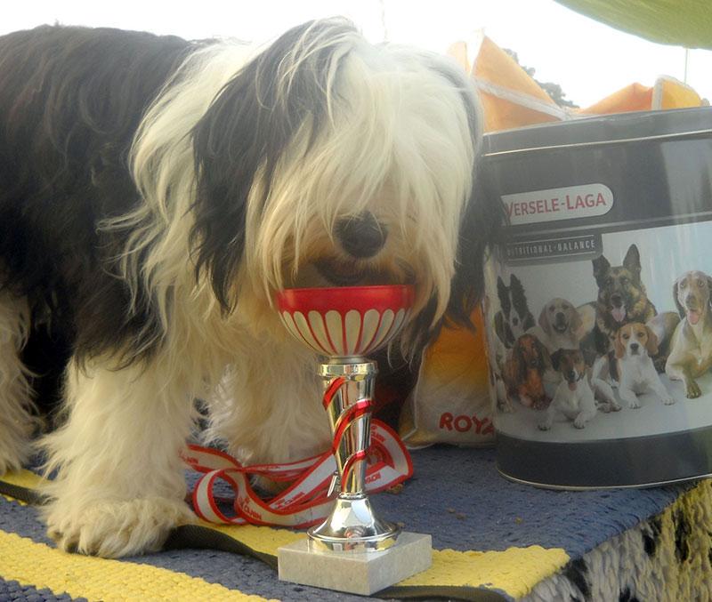 A kutyakiállítások az egyik legköltségesebb beruházásoknak számítanak a kutyatenyésztésben.